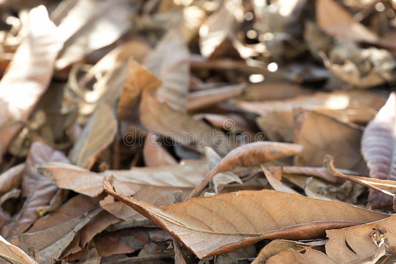 Torka sidor på jordningen om vinterdagen fotografering för bildbyråer