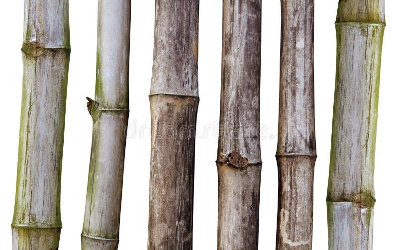 Torka stjälk av bambu arkivfoton