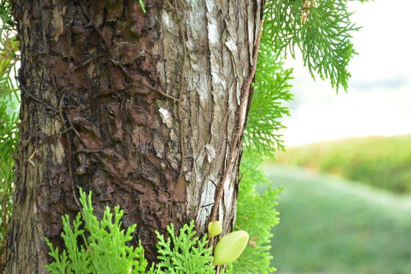 Torka växter på träd i parkera royaltyfri bild