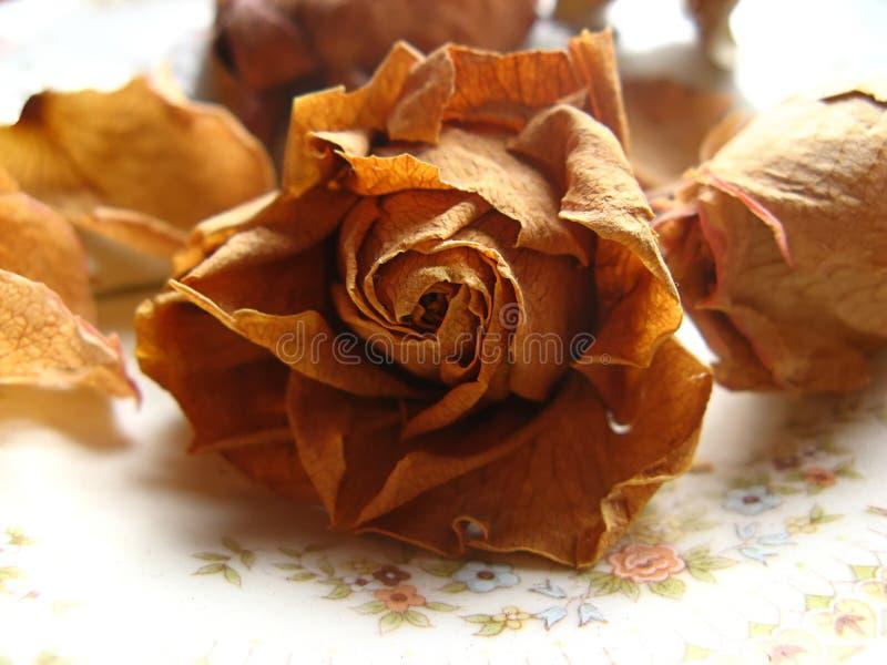 torkad blomma arkivbild