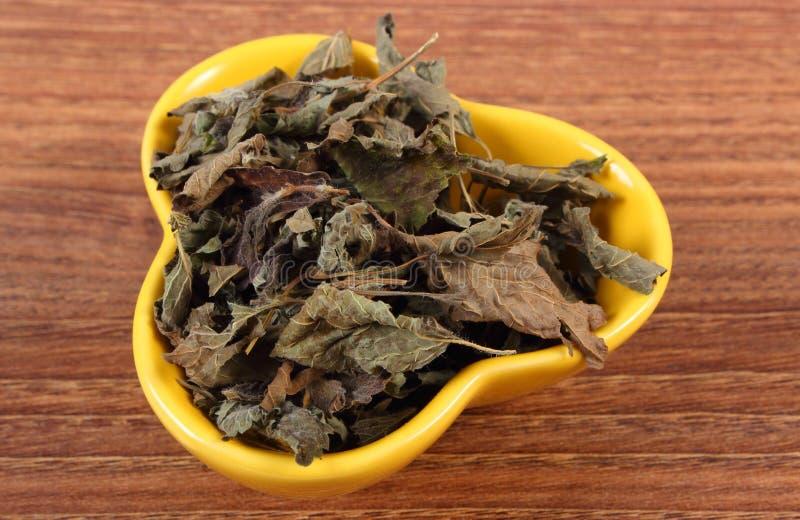 Torkad citronbalsam i bunke på trätabellen, herbalism arkivbilder