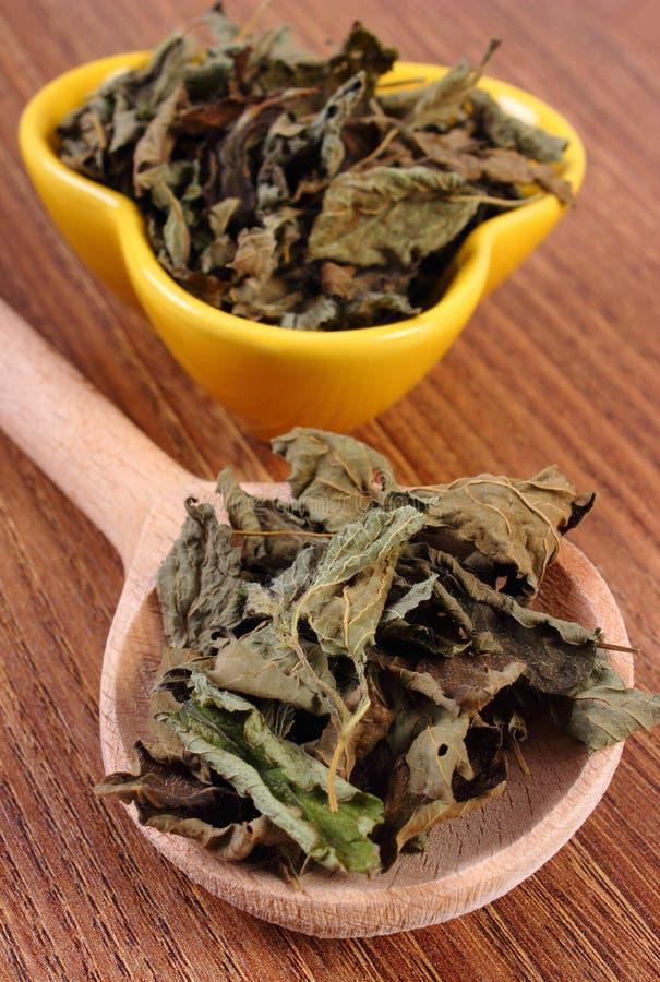 Torkad citronbalsam med skeden och bunken på trätabellen, herbalism royaltyfri bild