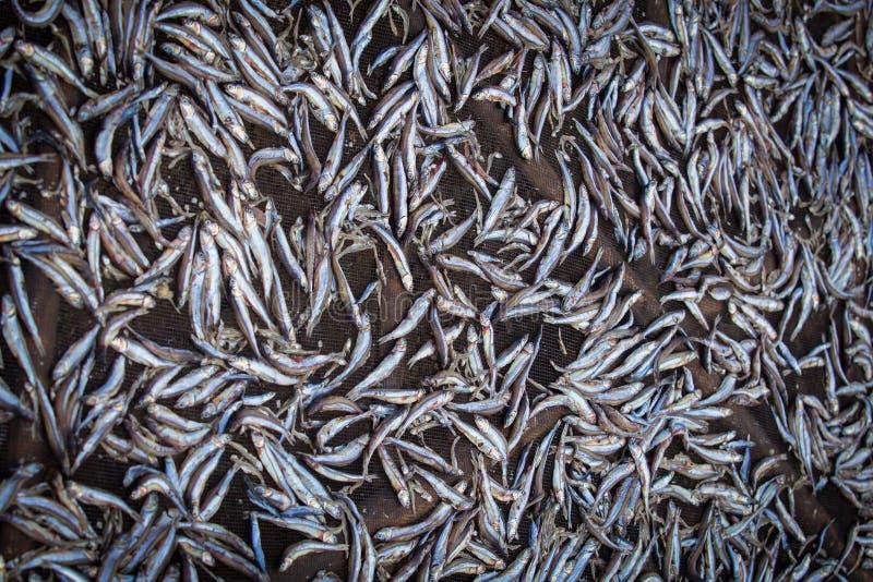 Torkad fiskspridning på ett ingrepp fotografering för bildbyråer