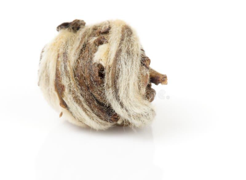 torkad grön skjuten tea för leafmakro oolong royaltyfri bild