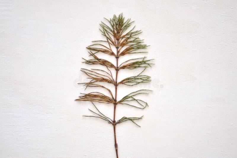 Torkad grön växt royaltyfria bilder