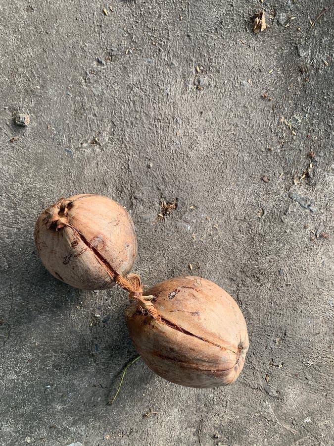 Torkad kokosnöt som tillsammans binds på cementgolvet, brun kokosnöt royaltyfria bilder