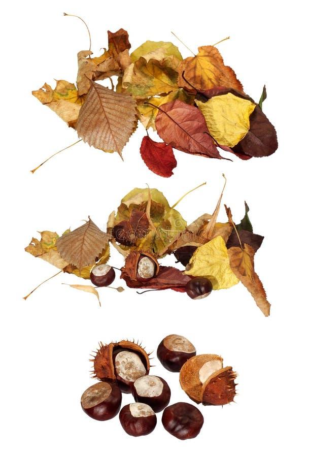 Torkad leaves och kastanj en closeup royaltyfri bild