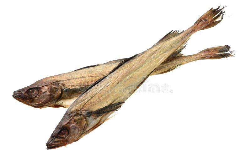 Torkad lyrtorsk arkivbild