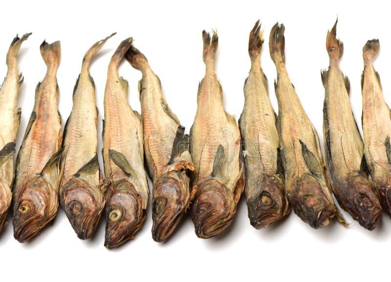 Torkad lyrtorsk royaltyfri fotografi