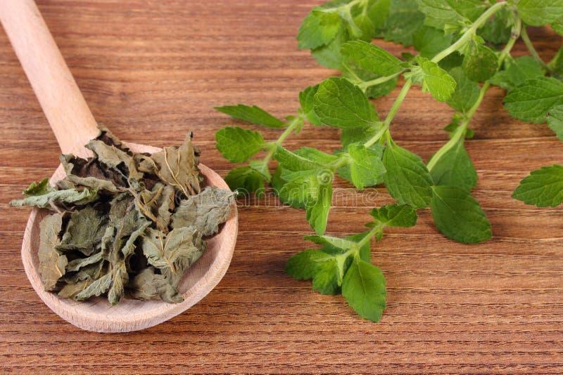 Torkad och ny citronbalsam med skeden på trätabellen, herbalism royaltyfri foto
