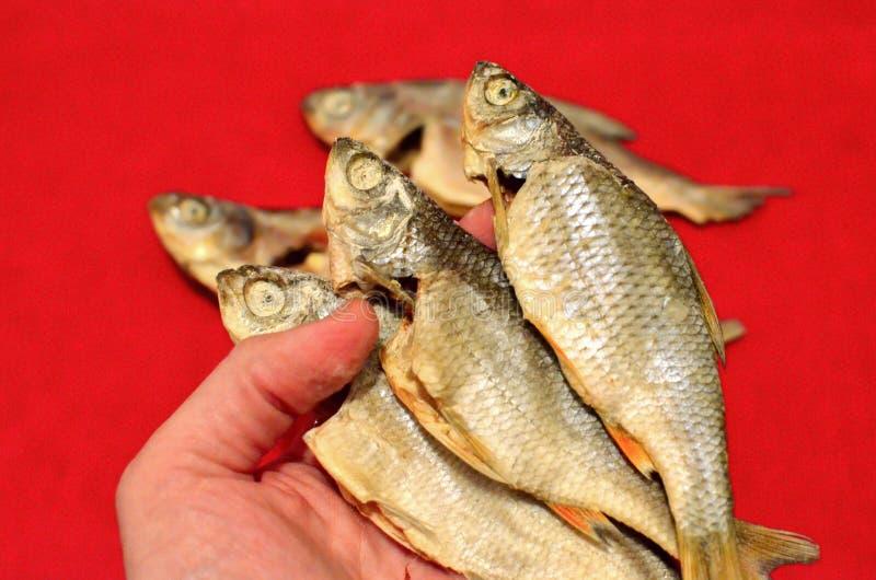 Torkad rimmad fisk Vobla på röd bakgrund arkivfoton