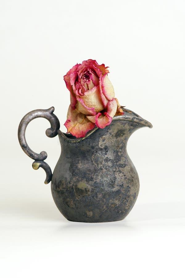 torkad rose tappning för tillbringare royaltyfri fotografi