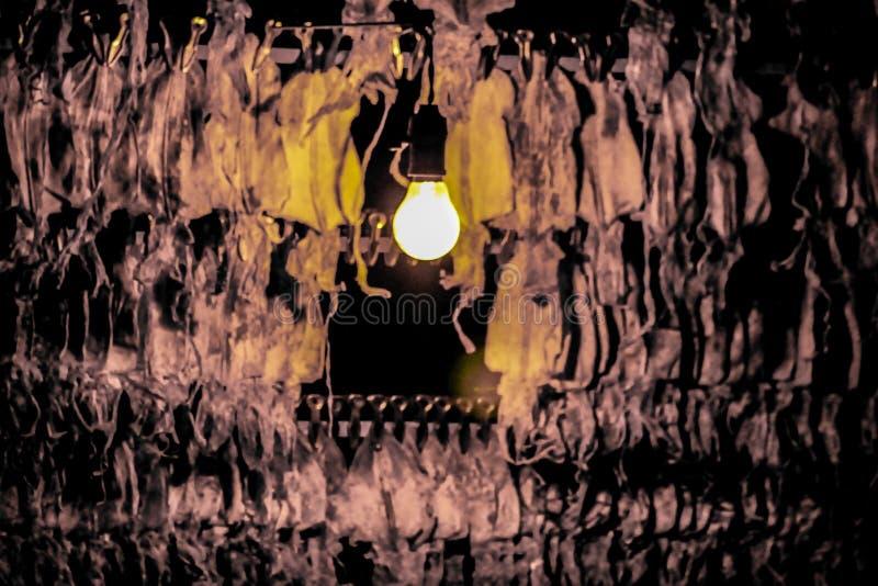 Torkad tioarmad bläckfisk royaltyfri foto