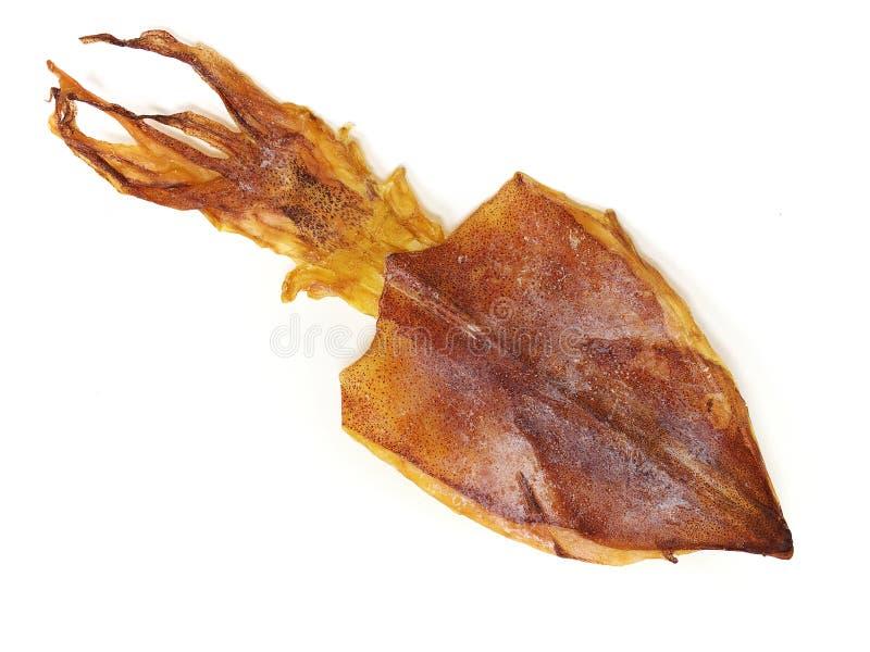 torkad tioarmad bläckfisk arkivbild