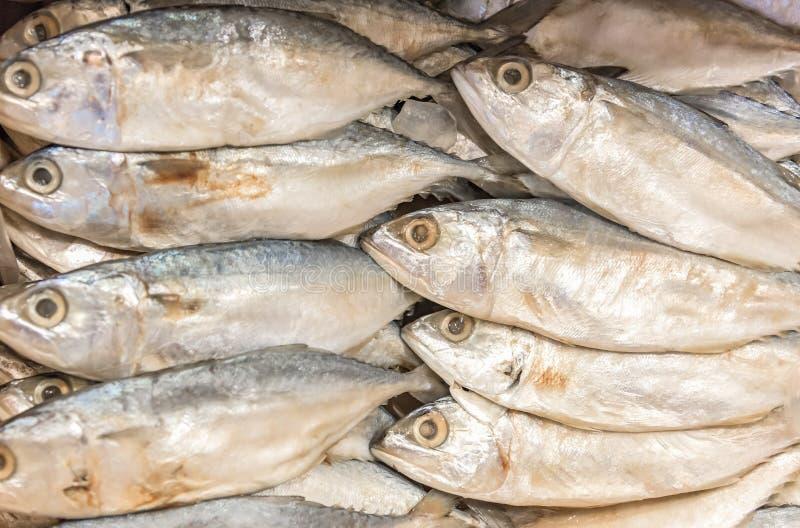 Download Torkad Torkad Eller Saltad Fisk För Makrill, Arkivfoto - Bild av mål, mackerel: 76702620