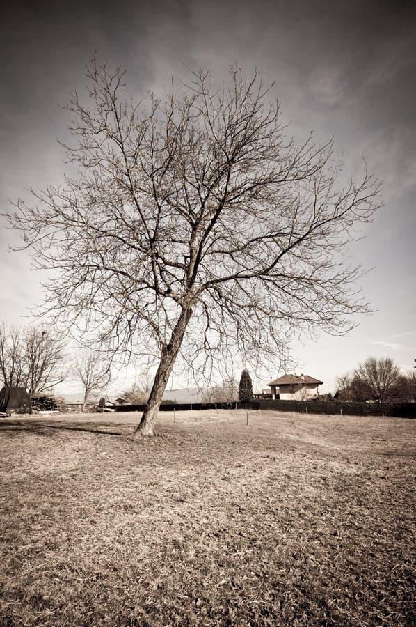 torkad tree royaltyfri fotografi