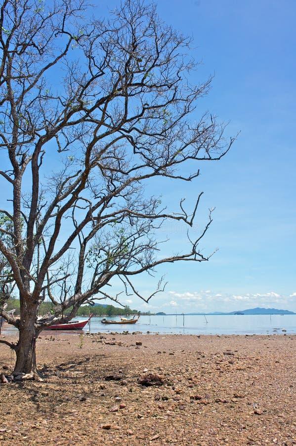 torkad tree upp royaltyfria foton