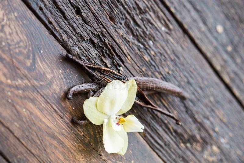 Torkad vaniljfröskidor och orkidévaniljblomma på träbakgrund vanilj royaltyfri bild