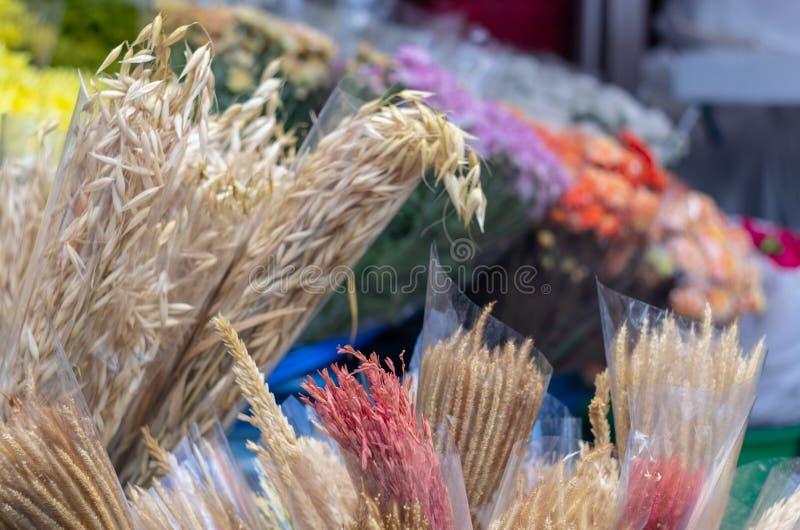 Torkade beigea bruna blommor med färgrik suddighetsbakgrund fotografering för bildbyråer