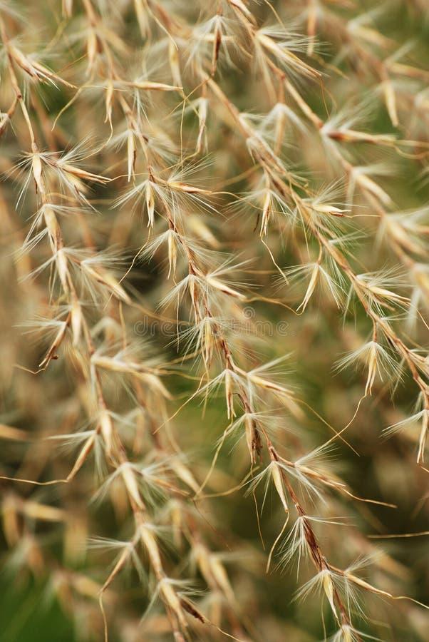 torkade blommahusks royaltyfri fotografi