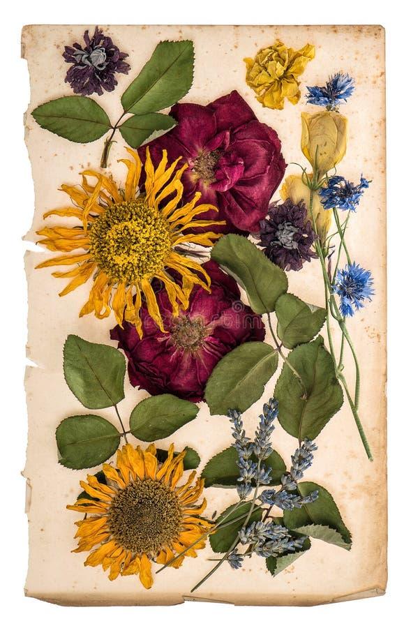 Torkade blommor över åldrigt papper herbariumlavendel, rosor, sunflo royaltyfri foto