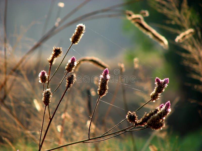 torkade blommor arkivbild