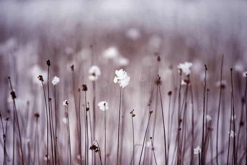 torkade blommor royaltyfri bild