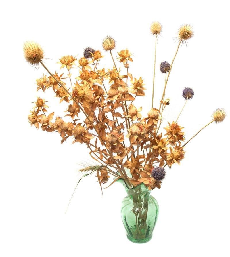 Torkade blommor i en vas på en vit bakgrund arkivfoto