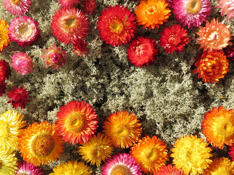 Torkade blommor på mossa royaltyfri bild