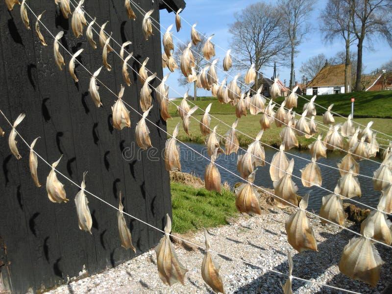 Torkade fiskar i en solig dag royaltyfri fotografi