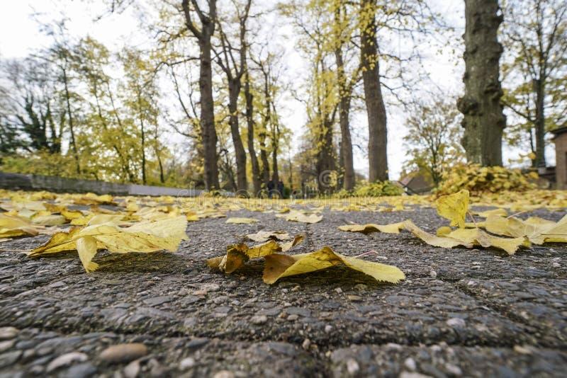 Torkade höstsidor på jordning på parkerar royaltyfri foto