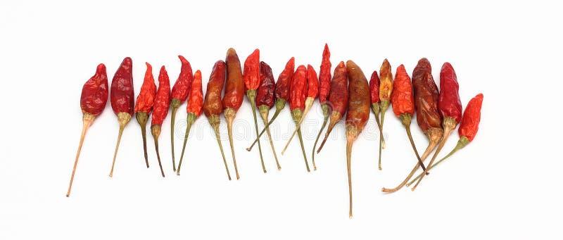 Torkade hoade isolerade chilipeppar royaltyfri bild