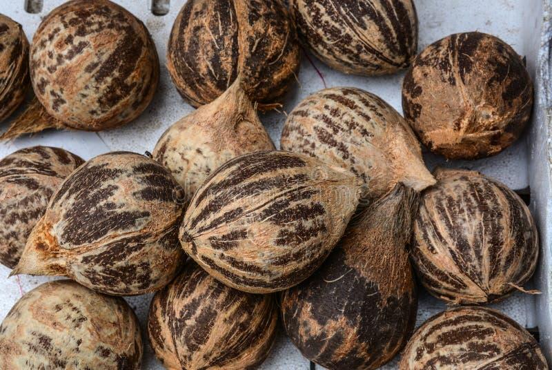 Torkade kokosnötfrukter som är till salu på den lantliga marknaden royaltyfri bild