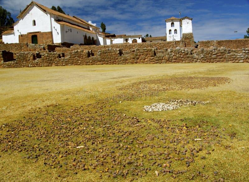 Torkade potatisar för Inca stil (chuños) arkivbild