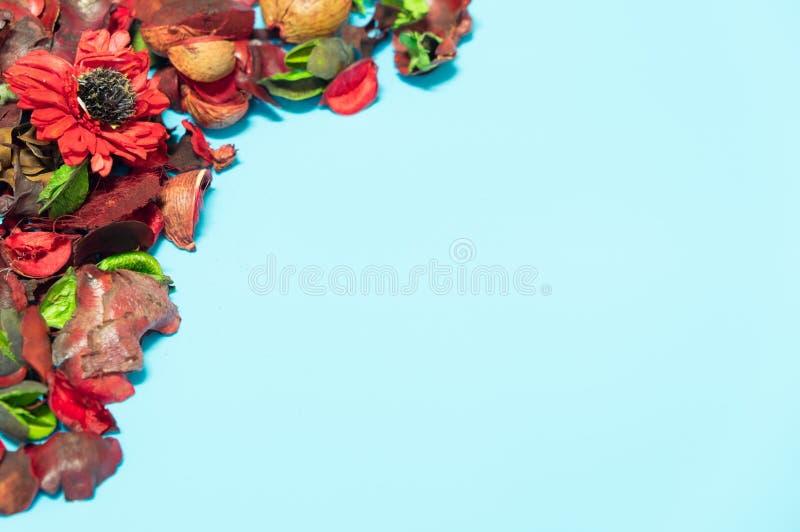 Torkade röda blommor förläggas på en blå bakgrund royaltyfri fotografi