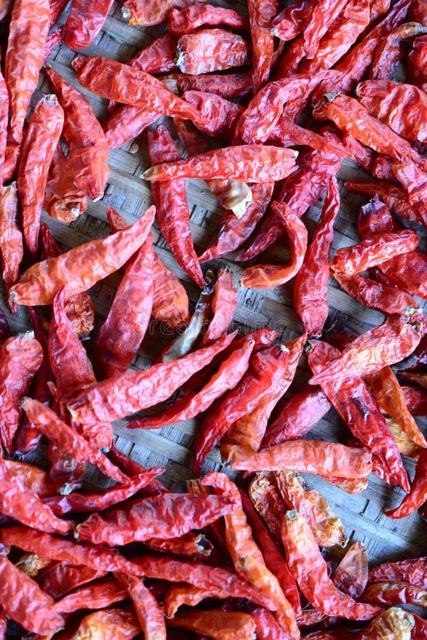 Torkade röda chili som torkar på en träkugge arkivfoton