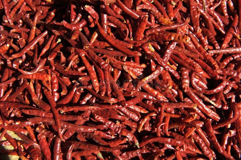 Torkade röda chilir royaltyfri bild