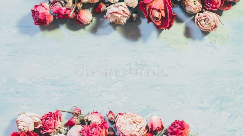 Torkade rosa gränsblått för kvinnor texturerade hälsningen royaltyfri bild