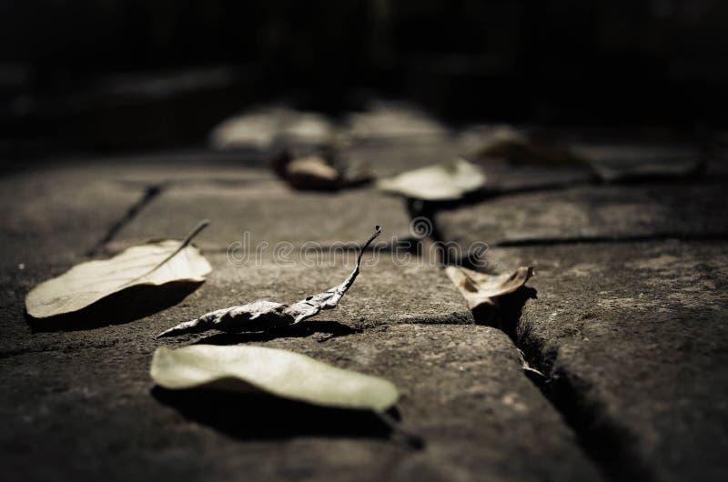 Torkade sidor på golvet arkivbild
