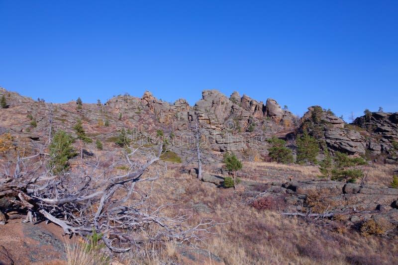 Torkade träd i bergen fotografering för bildbyråer