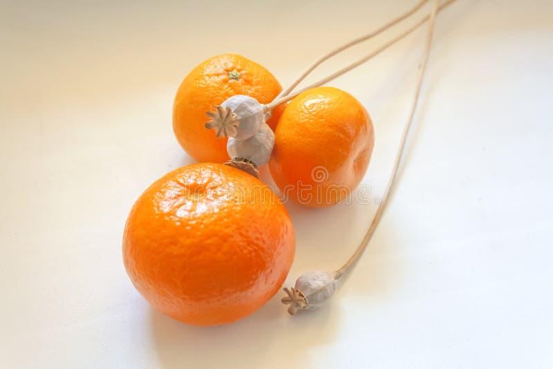Torkade vallmohuvud och ljusa orange tangerin royaltyfri fotografi
