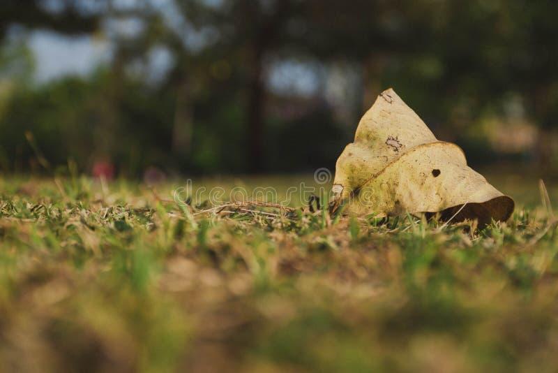 Torkat blad på gräsgolv i parkera royaltyfri fotografi