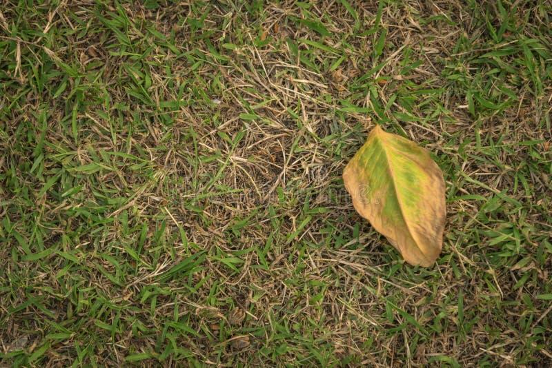 Torkat blad på gräsgolv i sikt för bästa vinkel royaltyfri foto
