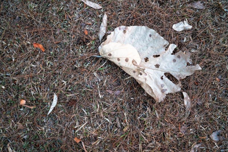 Torkat brunt blad som är stupat på jordningen av torkat gräs 1 arkivfoton