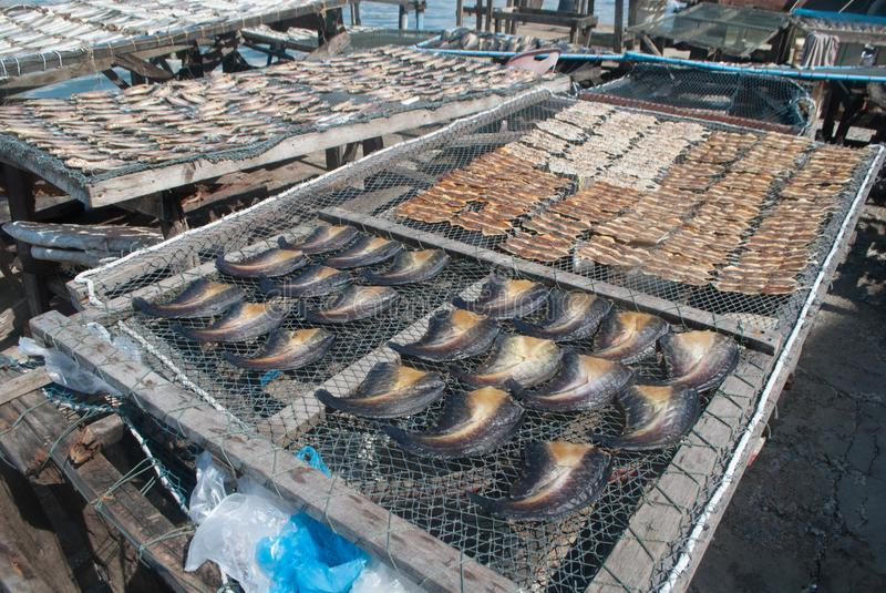 Torkat fisksolljus royaltyfri bild
