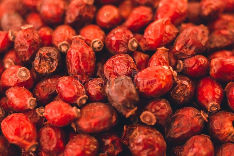 Torkat - frukt är en mycket användbar lös rosa växt royaltyfri fotografi
