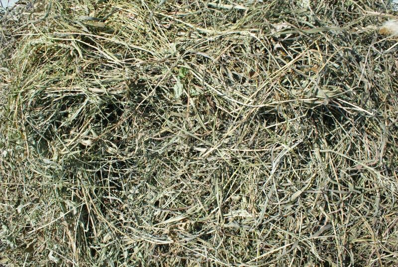 torkat gräs royaltyfri foto