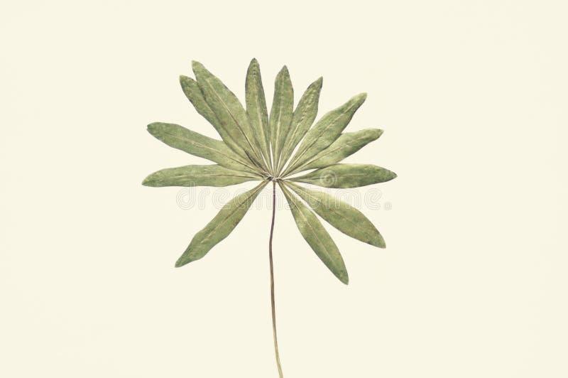 Torkat grönt blad arkivbilder