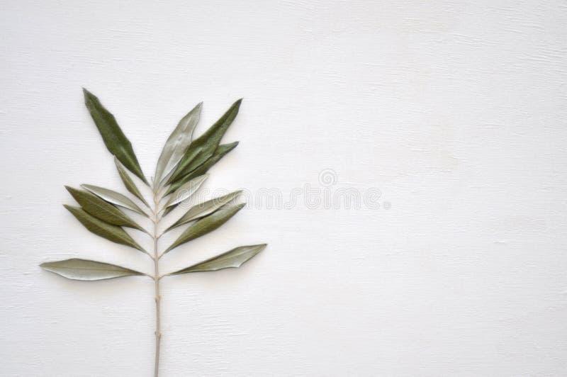 Torkat grönt blad royaltyfria foton