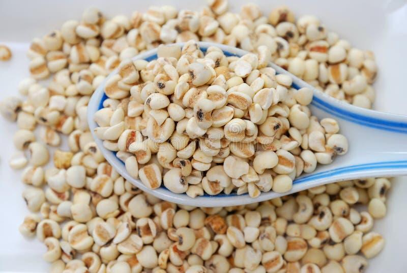 torkat korn kärnar ur spoonfulen royaltyfri bild